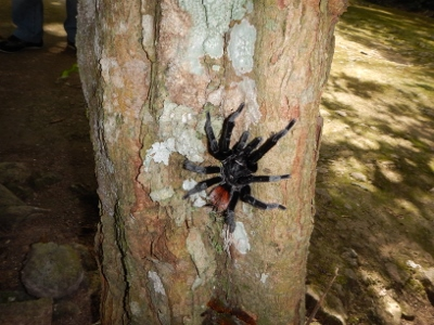 A Giant Tarantula Spider         appears on our walk to the next monument
